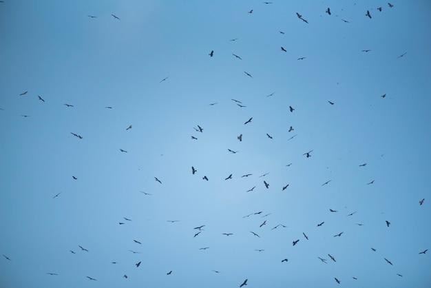 空と鷹の背景