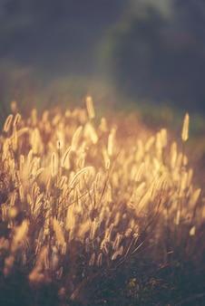 美しい野生の花、夕日