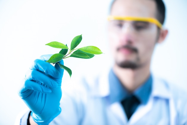 科学者は化学実験室で、天然物抽出物、石油、バイオ燃料溶液をテストします。