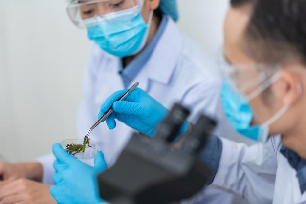 科学者は、化学実験室で天然物抽出物、オイルおよびバイオ燃料溶液をテストします。
