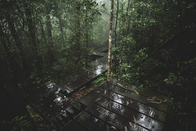 Вид на тропический лес, национальный парк кхауяй, таиланд