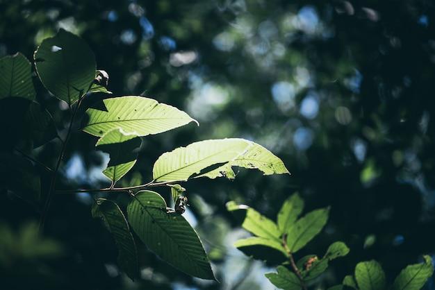 ぼやけた緑の背景、コピースペース、エコロジー、新鮮な壁紙の概念と庭の緑の葉と自然の景色の背景。
