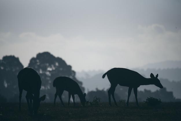 Дикие олени пасутся по утрам, лесные сцены
