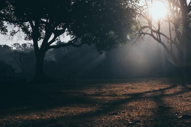 熱帯林の朝のシーン、自然日光の背景