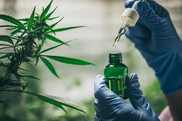 Профессиональные исследователи, работающие в области конопли, они проверяют растения, альтернативную медицину и концепцию каннабиса