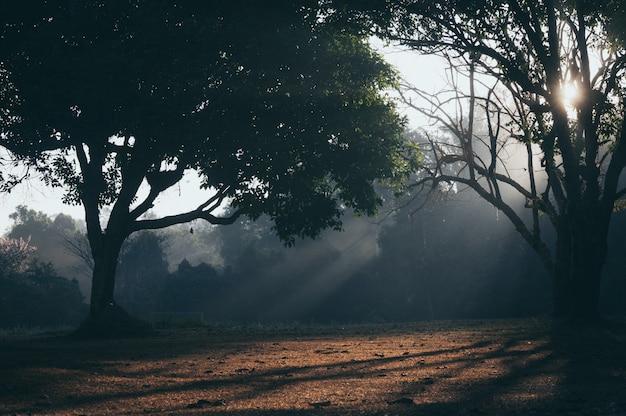 タイ、カオヤイ国立公園の朝のシーン