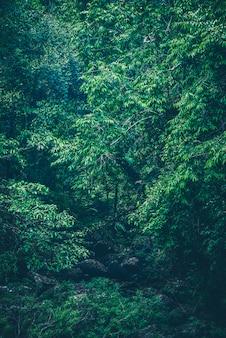 Природа зеленого леса, тропический лес в зеленом фильтре