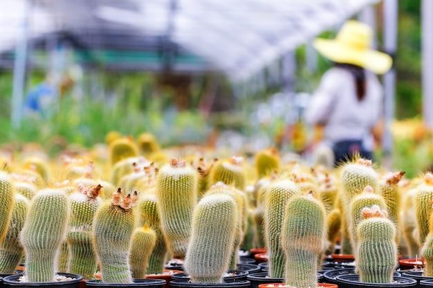 庭師が庭に新しい赤ちゃんサボテンを植えます。庭の計画。