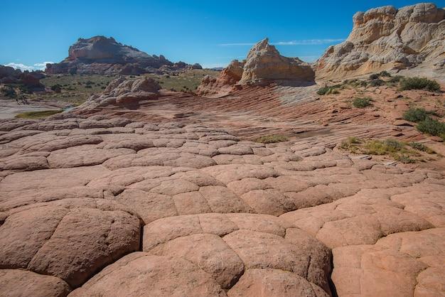 アリゾナ州ホワイトポッカー