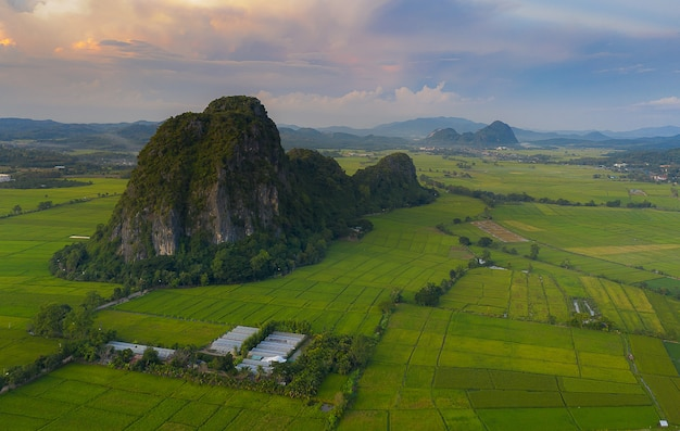 Аэрофотоснимок больших рисовых полей