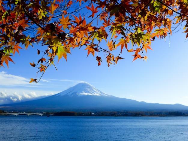 Красные и желтые кленовые листья на горе фудзи, озеро кавагутико, япония