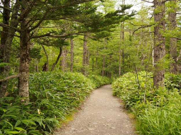 森の中の木の下の通路