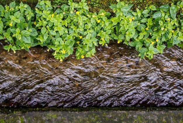 小さな緑の植物がある排水路を水が流れる