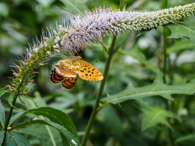 Бабочка у цветов в парке