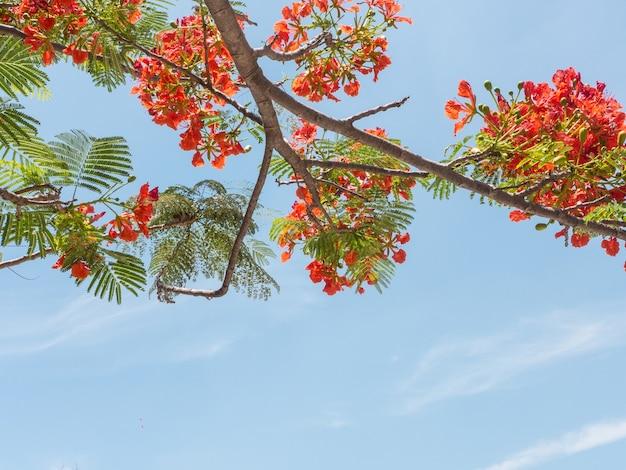 青い空の背景に炎の木