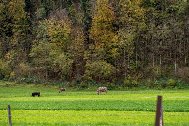 田舎の村とエンゲルベルク、スイス連邦共和国の秋の山の美しい景色