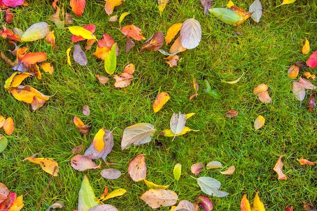 Высокий угол обзора осенних листьев на траве