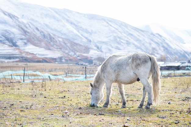 白い馬と雪の山