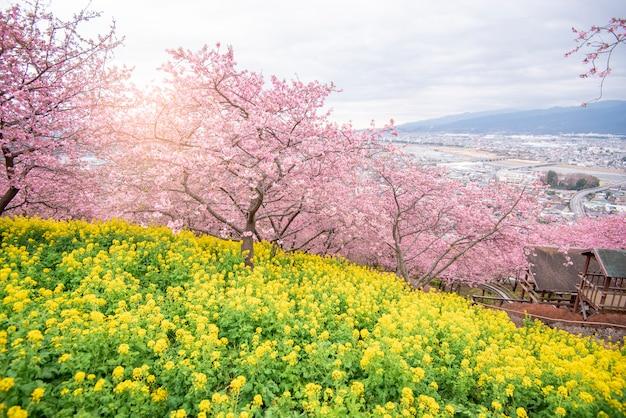 公園の美しい桜