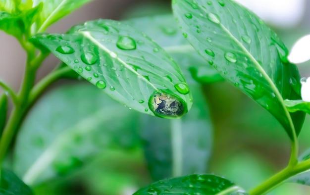緑の葉の上の地球の水地球の生態と環境