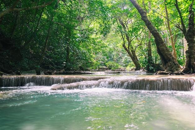 肥沃な森林環境における自然の滝