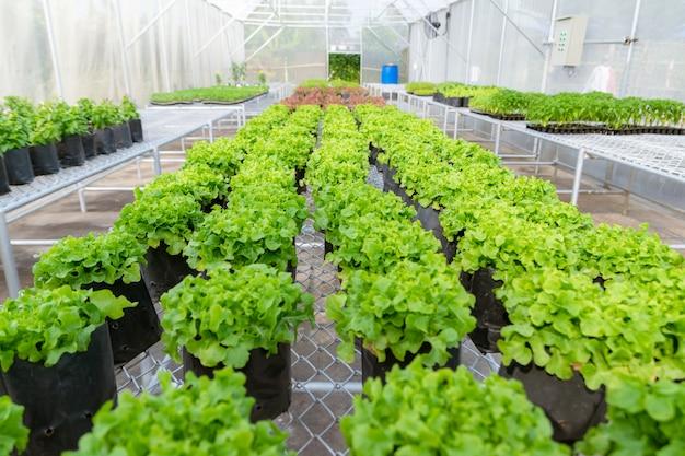 苗床環境に農場で植える有機野菜