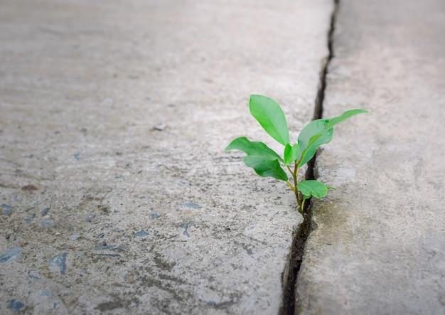 エコロジー植物の木と環境の干ばつ