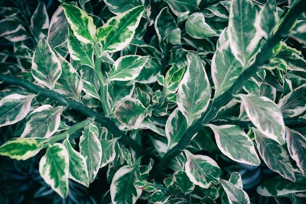 Зеленые листья природа фон концепции творческого из весны