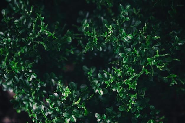 Зеленые листья природа фон