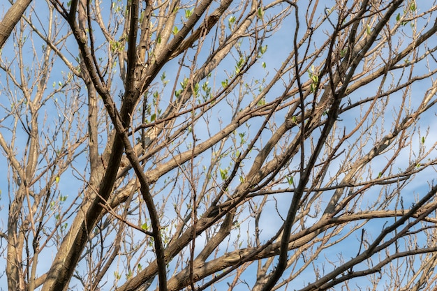 Ветвь дерева и сухие листья весной