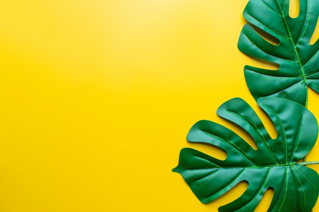 Зеленый лист желтый фон.