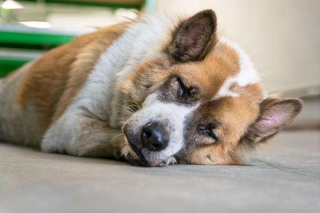 犬は寝ていて、少し休憩する、犬は眠って、床のセメントを夢見る