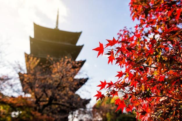 京都の東寺にある赤い葉