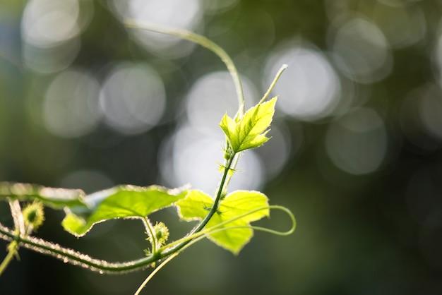 ボケの背景に緑の葉