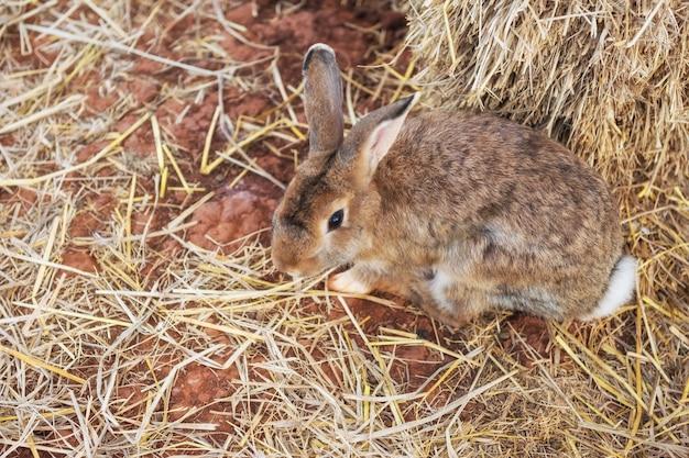 乾いた草の上のかわいい茶色のイースターのウサギ