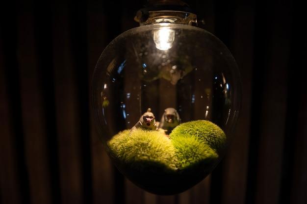 ランプの中の猿、渋温泉、山ノ内