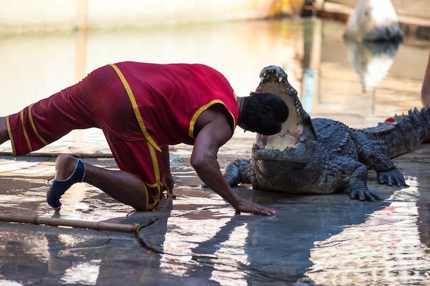 トレーナーはワニのあごに頭を置きました。タイで興奮した素晴らしいショー