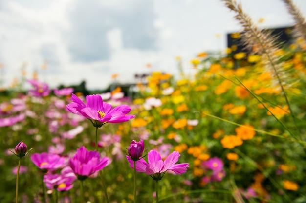 Розовые и оранжевые цветы в саду