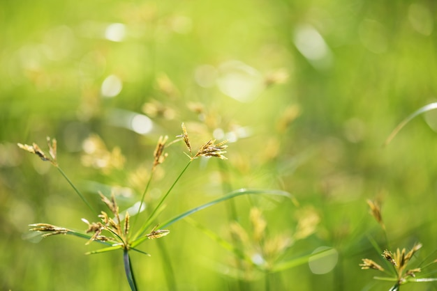 Цветочная трава с восходом боке