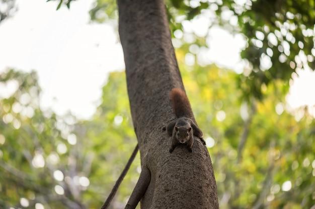 Коричневая белка на дереве весной