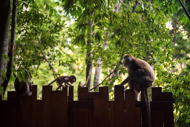 赤ちゃん猿がその親に壁を登る