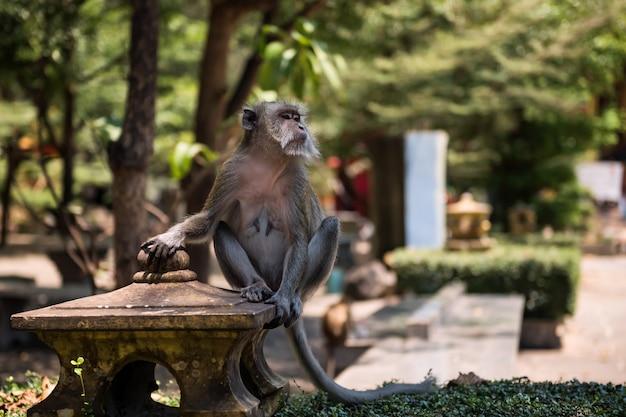 ワットタムスア、クラビの猿