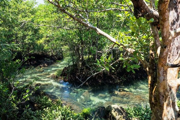 マングローブの森とクラビの沼地