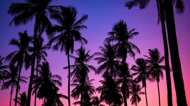 Кокосовая пальма с сумеречного неба в сумерках