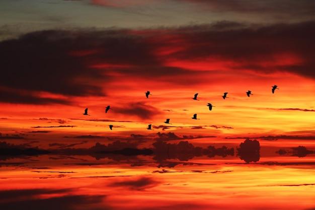 海と夕焼け空を飛んでいるシルエット鳥に日光の反射
