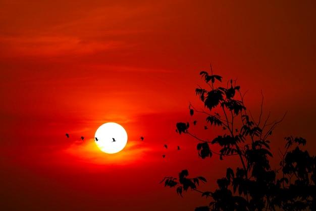 シルエットに沈む夕日が空に濃い赤い雲と家に飛んでいる鳥を残します