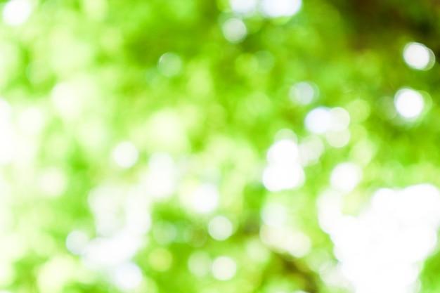 朝は庭の緑の葉をぼかし