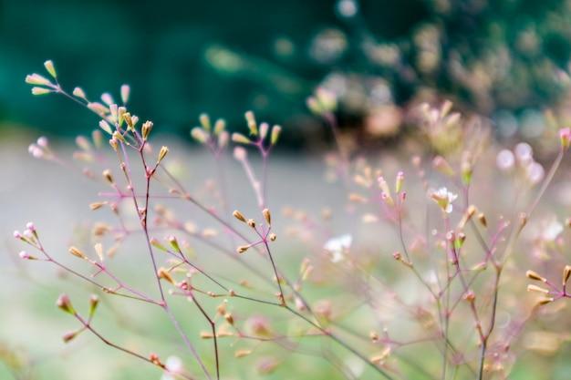 雨の後急成長している草の上の雑草の小さな花