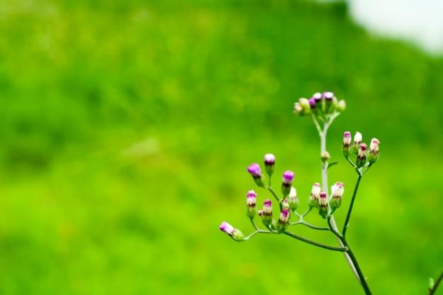 庭で活気づいている草の上の雑草の小さな花