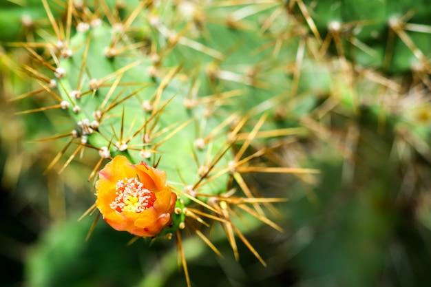 野生の砂漠のサボテンの花が咲く緑豊かな庭園